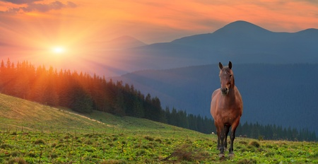 Paesaggio estivo con cavallo in montagna. Tramonto photo