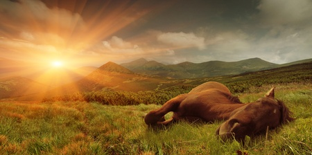 Summer landscape with a sleeping horse in the mountains. Sunrise photo