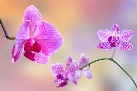 Pink orchid against bokeh background photo