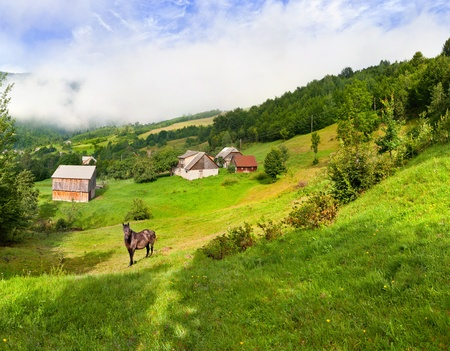 Beautiful summer landscape with a horse in the village in mountains photo