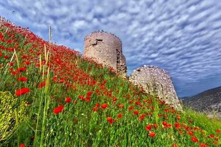 The ruins of the Genoese fortress with a field of blooming poppies photo