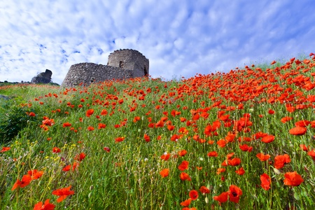 genoese: The ruins of the Genoese fortress with a field of blooming poppies Stock Photo