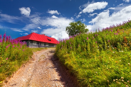 beggar's: house with red roof in a field of flowers Stock Photo