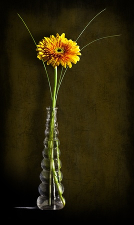 Yellow gerbera in a glass vase against a dark vintage background photo
