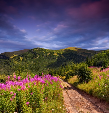 Beautiful summer landscape in the mountains. Sunset photo