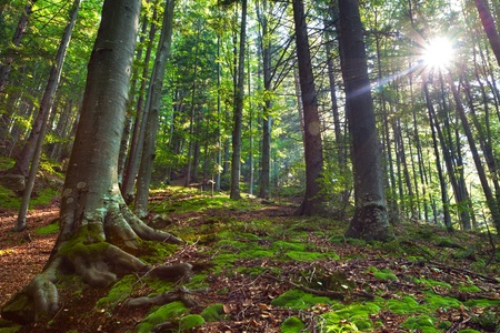 Summer morning in mystical woods photo