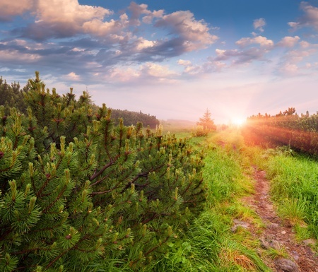 Beautiful summer morning in the forest  photo