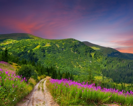 light trails: Beautiful summer landscape in the mountains with pink flowers. Sunset Stock Photo
