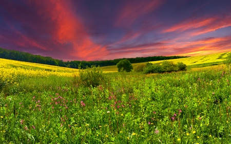 Colorful blossom field in the summer  photo