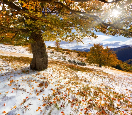 First snow in the forest in the mountains photo