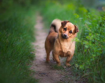 plaintive: Playful small dog looking plaintive at you
