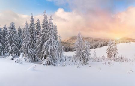 christmas landscape: winter sunrise in the Carpathian mountains