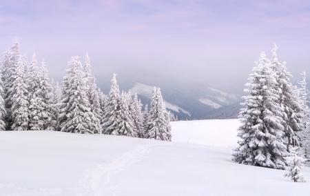 winter landscape in the Carpathian mountains photo