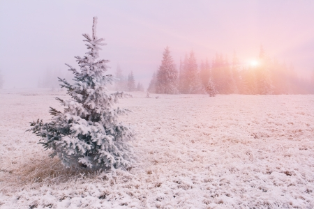 Winter landscape with fog. Sunrise photo