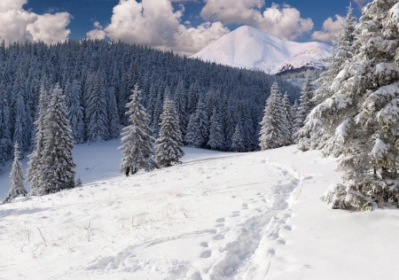 wintery day: Beautiful winter landscape in the mountains Stock Photo