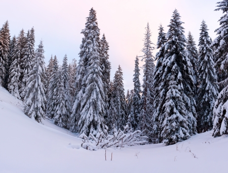 Trees covered with hoarfrost and snow in forest photo