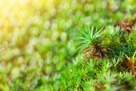 green grass background with sun beam and bright boukeh photo