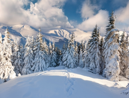 winter landscape: Beautiful winter landscape in the mountains Stock Photo