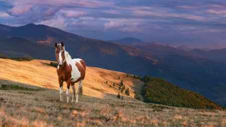 Colorful autumn landscape in the mountains with horse. Sunrise photo