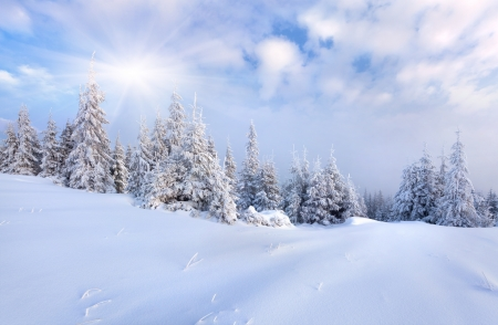 hoar: Beautiful winter landscape with snow covered trees.