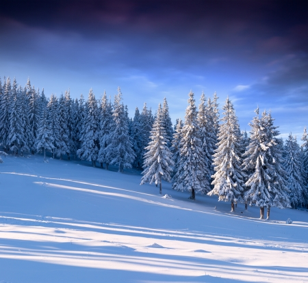 spar: Mooie winter landschap in het bos Stockfoto