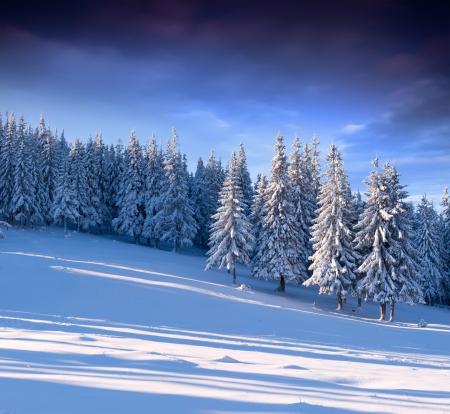 abeto: Paisagem bonita do inverno na floresta