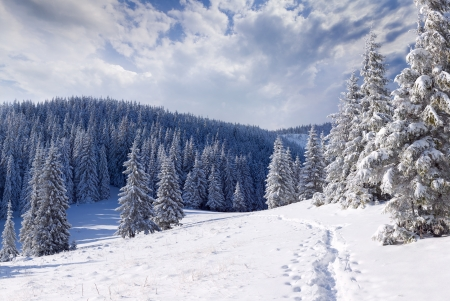 Beautiful winter landscape in the mountains Stock Photo - 15256207