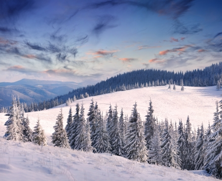 Trees covered with hoarfrost and snow in mountains. Sunrise Stock Photo - 15256605