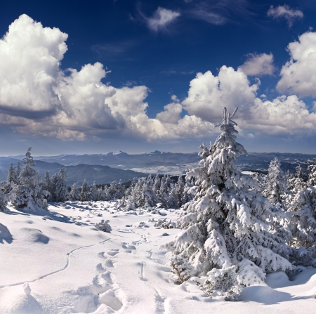 wintery day: Beautiful winter landscape in the  mountains