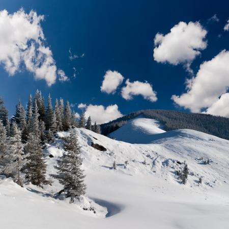 bosque con nieve: Paisaje hermoso del invierno en las monta�as
