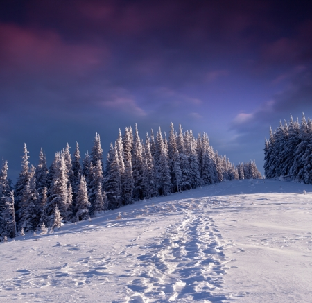hoar: Trees covered with hoarfrost and snow in mountains. Evening