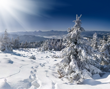 Beautiful winter landscape in the Carpathian mountains photo