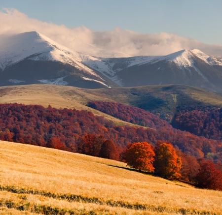 nature landscape: Colorful autumn landscape in the Carpathian mountains
