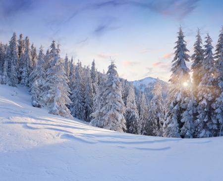 bosque con nieve: Paisaje hermoso del invierno en las monta�as. Salida del sol Foto de archivo