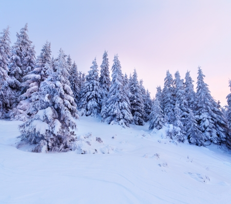 fresh snow: Beautiful winter landscape in the mountains  Sunrise
