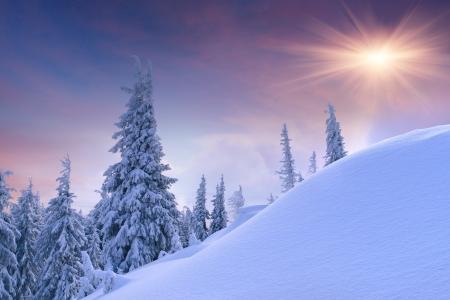 abetos: Paisaje hermoso del invierno en las montañas. Salida del sol Foto de archivo