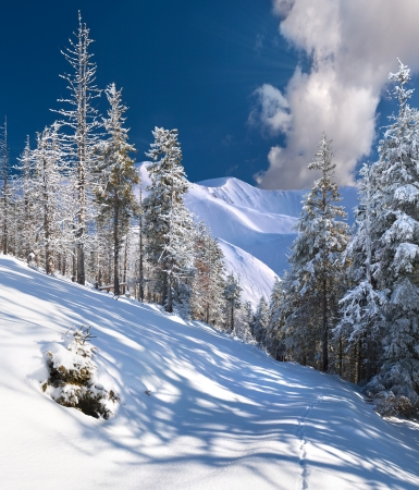 sunny cold days: Beautiful winter landscape in the mountains Stock Photo