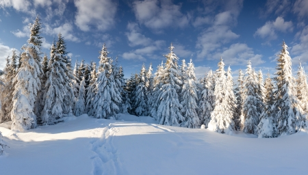 Beautiful winter landscape in the forest photo