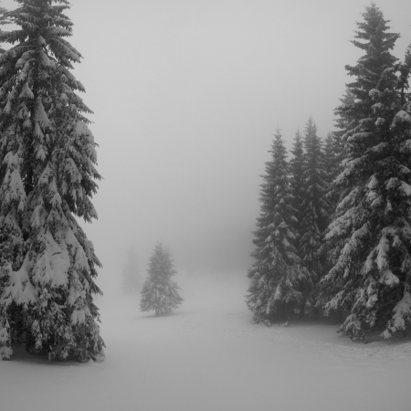 Black and white winter landscape in the forest