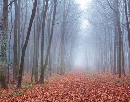 beautiful scenery: Misty trail in autumn forest Stock Photo