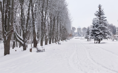 Snow-covered landscape in the city park. Ternopil, Ukraine Stock Photo - 16463942