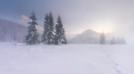 hoar: Beautiful winter landscape in the mountains. Sunrise Stock Photo