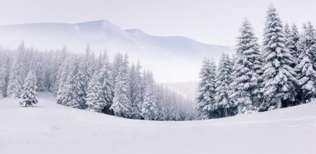 bosque con nieve: Panorama del paisaje de invierno con niebla en las monta�as Foto de archivo