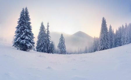 fresh snow: Foggy winter sunrise in the mountains Stock Photo