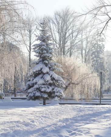 Snow-covered trees in the city park photo