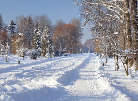 Beautiful winter landscape in the city park.  photo