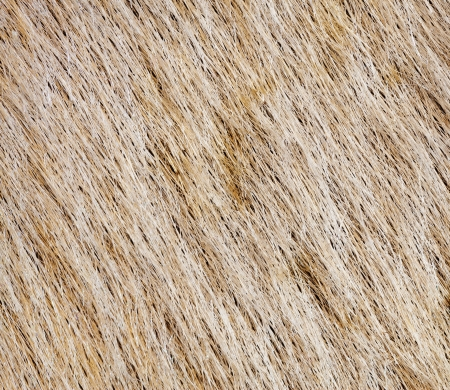 beige fur for background usage photo