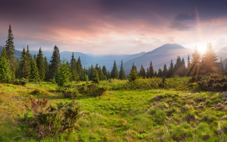 Mooie zomerse landschap in de bergen. Zonsopgang Stockfoto