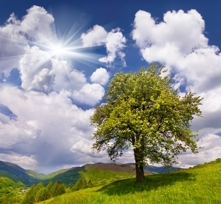 clear day: Flowering pear tree in spring in the mountains Stock Photo