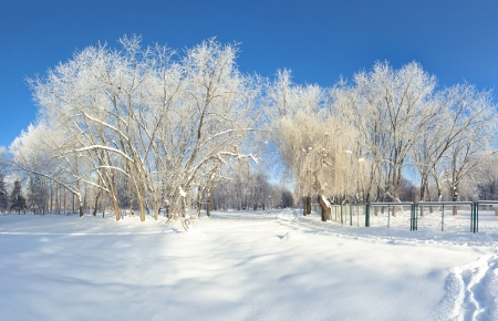 Beautiful winter landscape in the city park photo